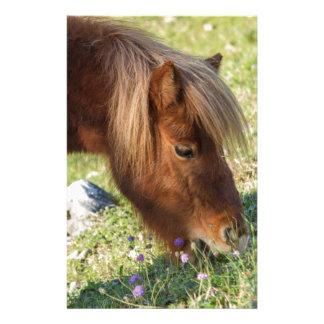 horse pony  in the farm stationery