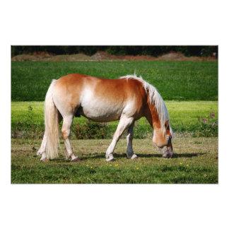 Horse portrait art photo