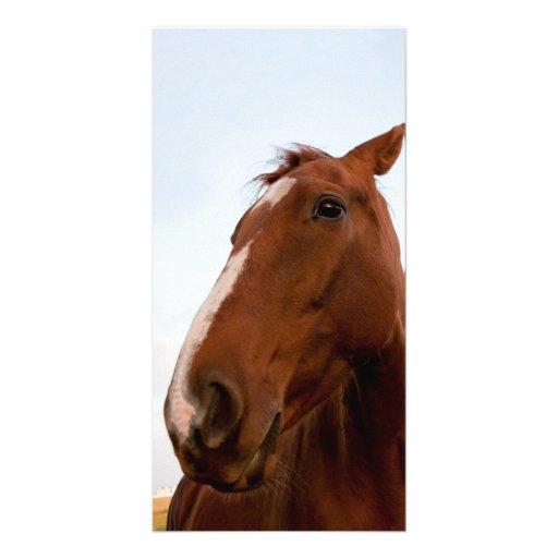 Horse portrait customized photo card