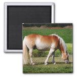 Horse portrait square magnet