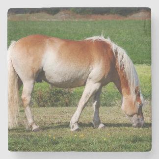 Horse portrait stone coaster