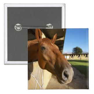 Horse portrait, Swaziland, South Africa 15 Cm Square Badge