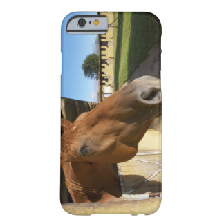 Horse portrait, Swaziland, South Africa Barely There iPhone 6 Case