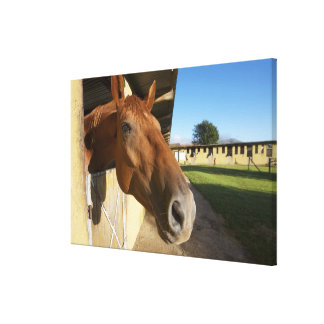 Horse portrait, Swaziland, South Africa Canvas Print