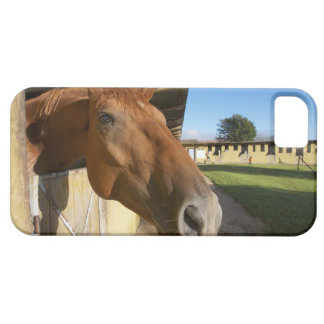Horse portrait, Swaziland, South Africa iPhone 5 Case