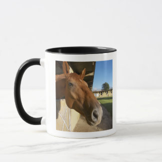 Horse portrait, Swaziland, South Africa Mug