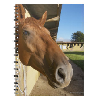 Horse portrait, Swaziland, South Africa Spiral Note Book