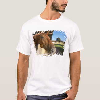 Horse portrait, Swaziland, South Africa T-Shirt