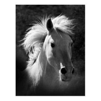 Horse Portrait V Postcard