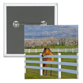 Horse poses by Flathead Cherry orchard near 15 Cm Square Badge