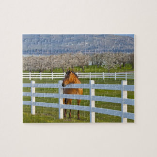 Horse poses by Flathead Cherry orchard near Jigsaw Puzzle