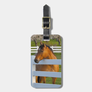 Horse poses by Flathead Cherry orchard near Luggage Tag
