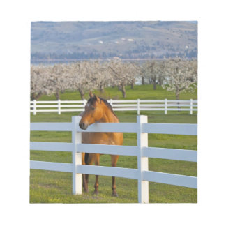 Horse poses by Flathead Cherry orchard near Notepad