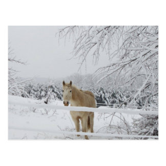 horse post card winter scenery
