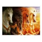 Horse Postcard