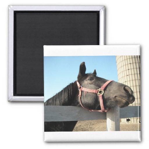Horse/Ranch/Barn Fridge Magnets