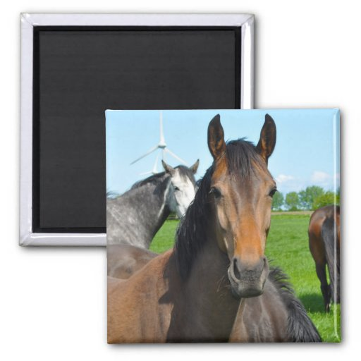 Horse Ranch Farm Country Pet Cute Animal Refrigerator Magnet