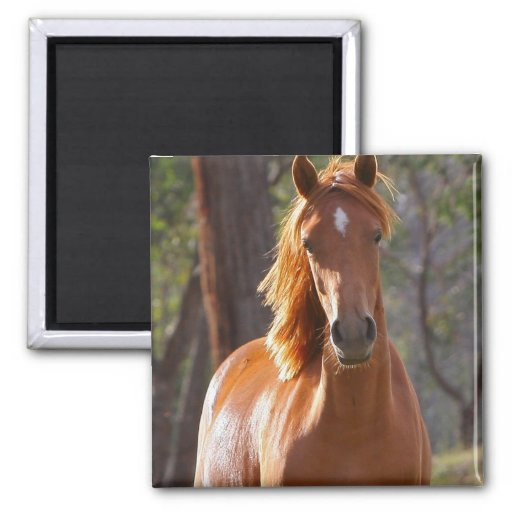 Horse Ranch Farm Country Pet Cute Animal Magnets
