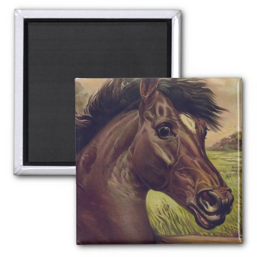 Horse Ranch Farm Country Pet Cute Animal Vintage Magnets