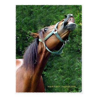 Horse Raspberry (Attitude Horse style) Postcard