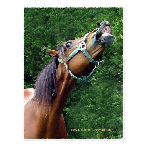Horse Raspberry (Attitude Horse style) Postcards