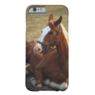 Horse resting on grass, close-up barely there iPhone 6 case