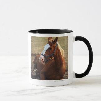 Horse resting on grass, close-up mug
