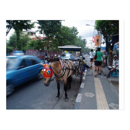 horse ride @ Bali Postcard