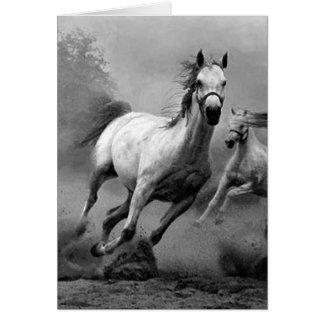 Horse Running Cards