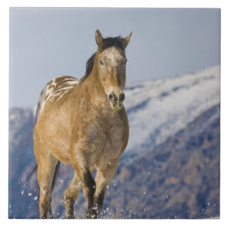 Horse Running in Snow 2 Tile