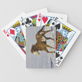 Horse Running in Snow Bicycle Playing Cards