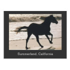 Horse Running on the Beach at Summerland, CA Postcard