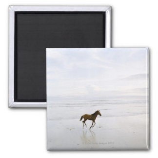 Horse running on the beach magnet