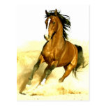 Horse Running Post Cards