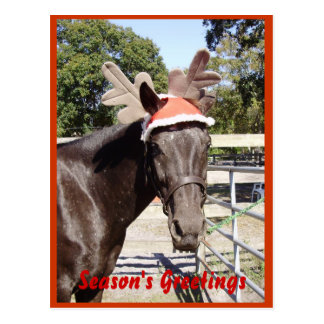 Horse Season's Greetings Postcard