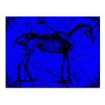 horse skeleton blue postcards