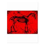 Horse skeleton red postcards