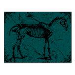 horse skeleton turquiose postcards
