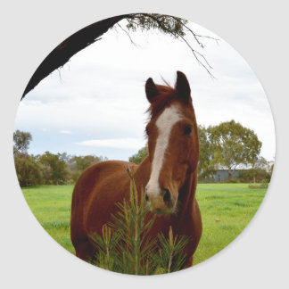 Horse_Sniffing_A_Bush,_Large_Round_Stickers Round Sticker