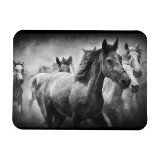 Horse Stampede Magnet