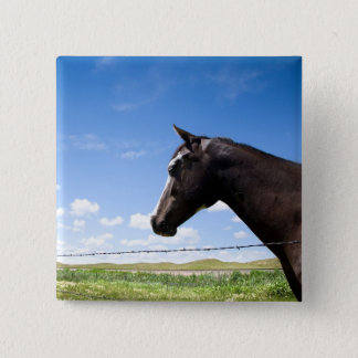 Horse standing at fence in pasture 15 cm square badge