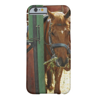 Horse standing in a stable barely there iPhone 6 case