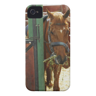 Horse standing in a stable Case-Mate iPhone 4 cases