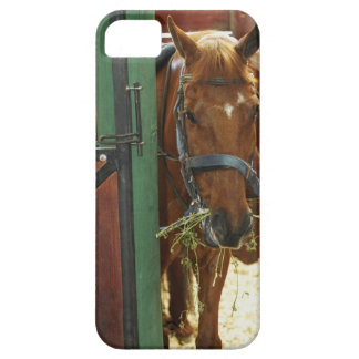 Horse standing in a stable iPhone 5 cases