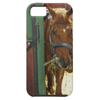 Horse standing in a stable iPhone 5 cover