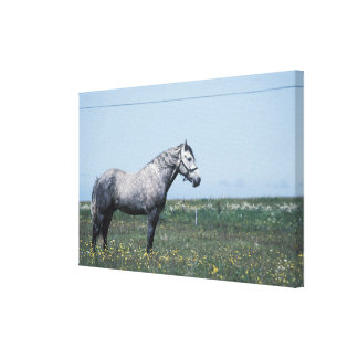 Horse standing in field canvas print