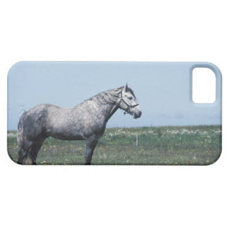 Horse standing in field case for the iPhone 5