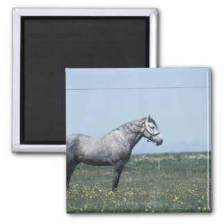 Horse standing in field square magnet