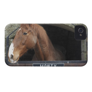 Horse standing looking out of its stable iPhone 4 case