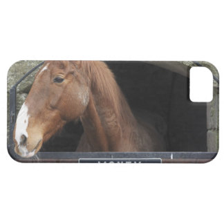 Horse standing looking out of its stable iPhone 5 cases